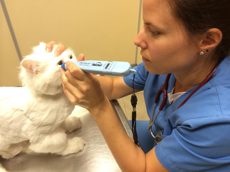 Servicio de oftalmología veterinaria